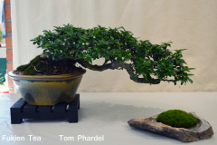Fukien Tea by Tom Phardel