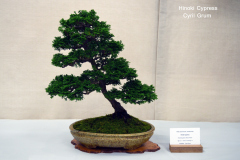 Hinoki Cypress by Cyril Grum