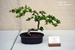 Fukien Tea by Joan Overmire