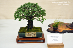 Chinese Cork Bark Elm by Matt Gothberg