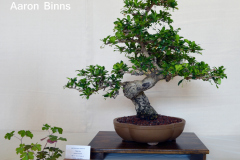 Fukien Tea by Aaron Binns