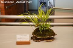 Kusomono - Accent Plant