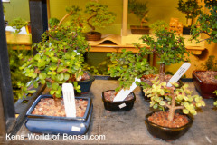 Kens World of Bonsai.com