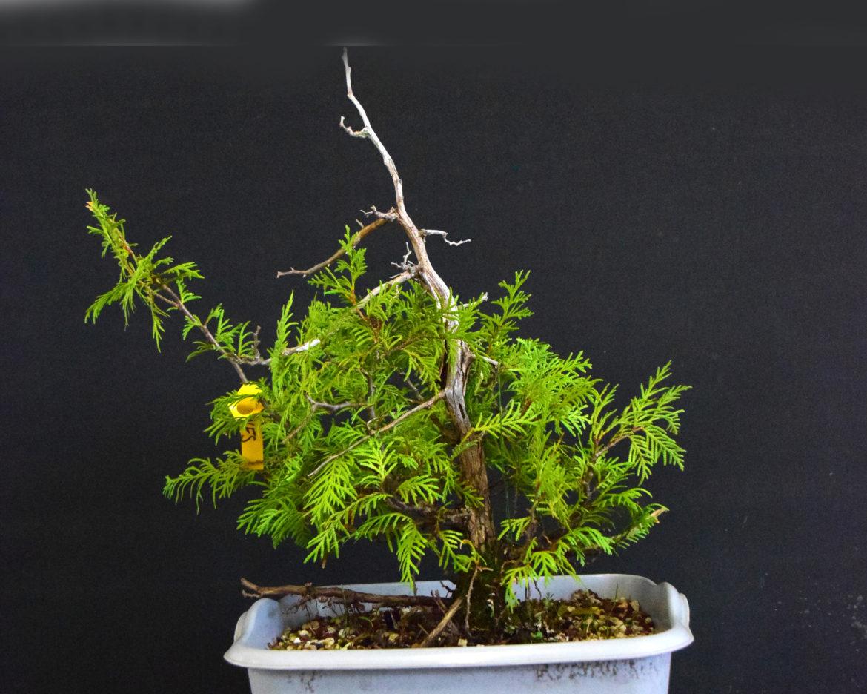 Workshop Tree