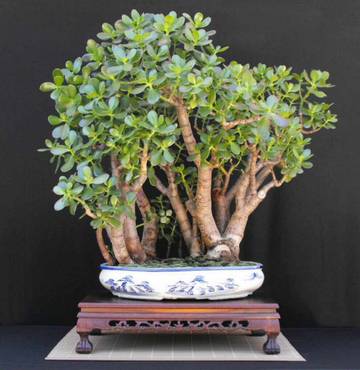 Jade Forest