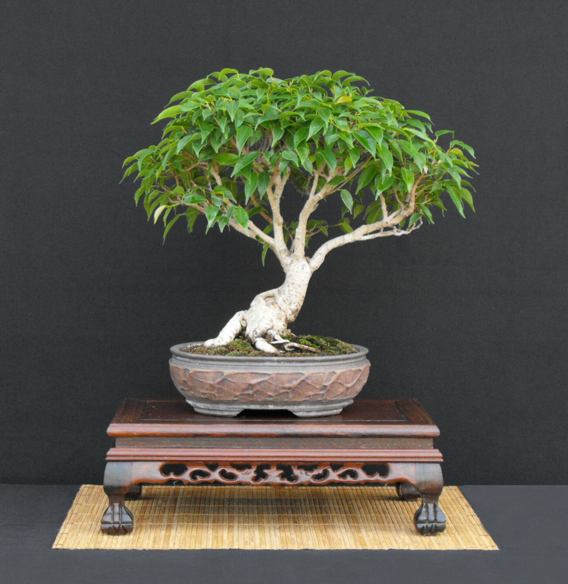Oriental Fig